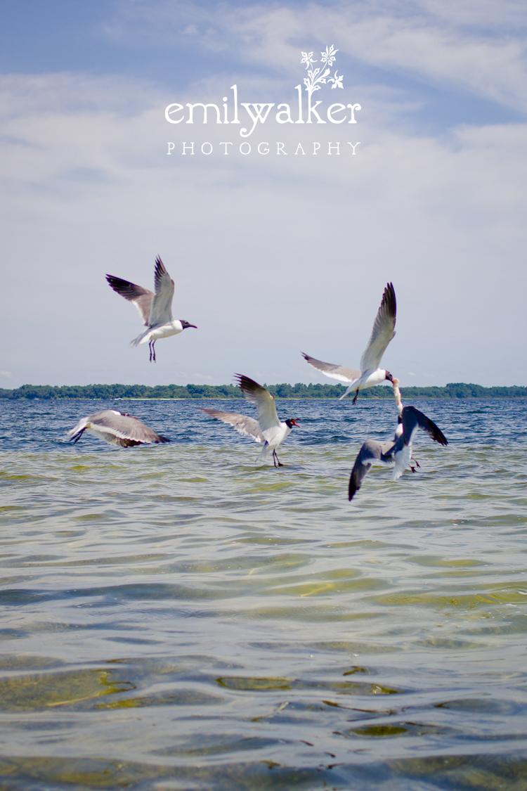 Emily-walker-photography-travel-florida-18-2