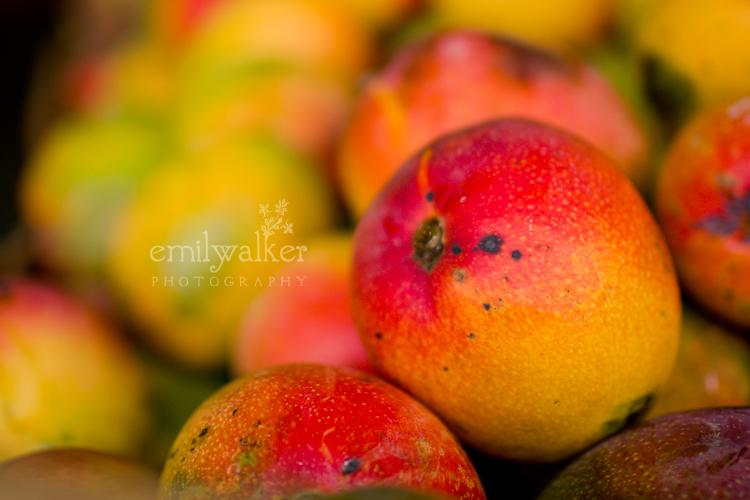Emily-walker-photography-travel-florida-39